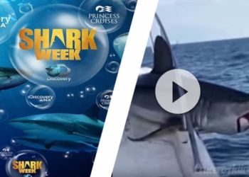 shark week Discovery Channel Princess Cruises Princess Cruises - CruceroAdicto.com Princess Cruises - CruceroAdicto.com