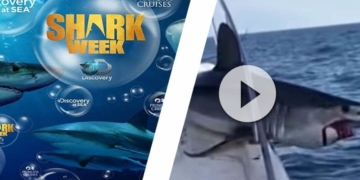 shark week Discovery Channel Princess Cruises Noticias de Princess Cruises by CruceroAdicto.com - CruceroAdicto.com Noticias de Princess Cruises by CruceroAdicto.com - CruceroAdicto.com