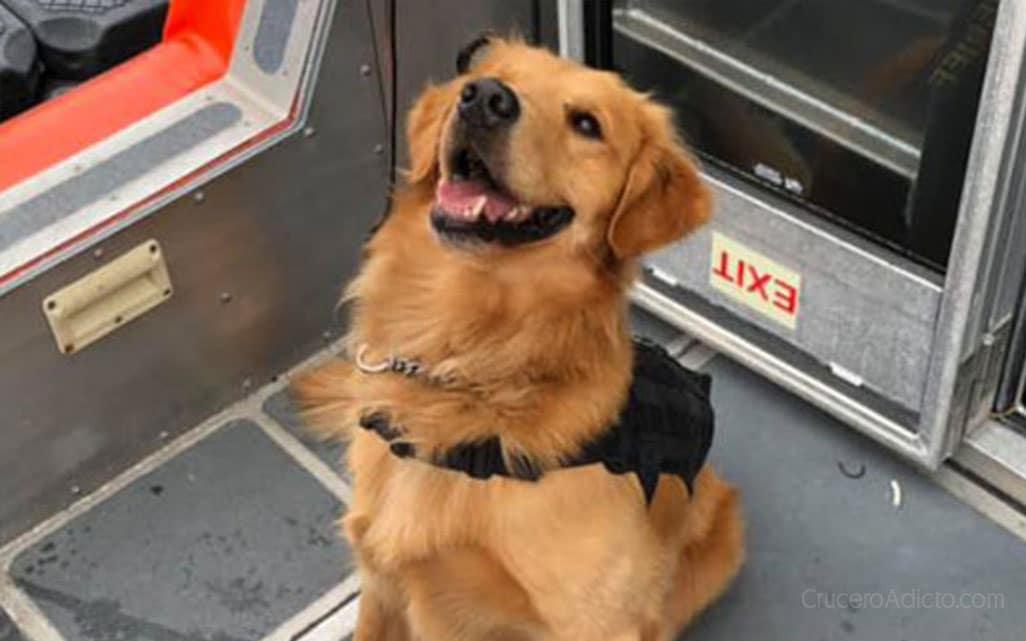 Perro antidrogas sufre sobredosis al rastrear maletas de crucerista Perro antidrogas sufre sobredosis al rastrear maletas de crucerista - CruceroAdicto.com